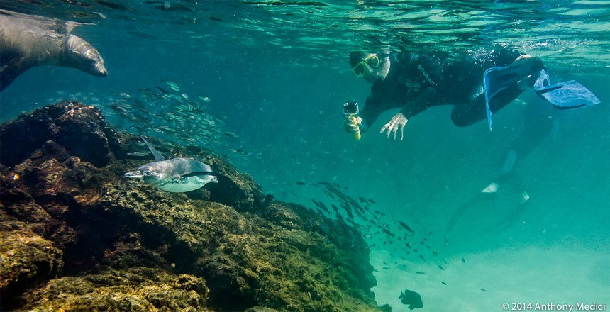 20140411-1017-AnthonyMedici-AW101768.jpg