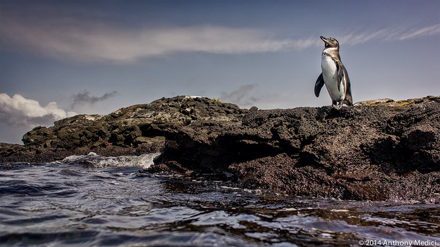 20140411-1050-AnthonyMedici-AW101968.jpg