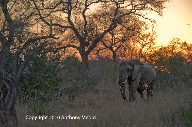 STUDENT AW 3S015619-Elephant-at-Sunrise.JPG